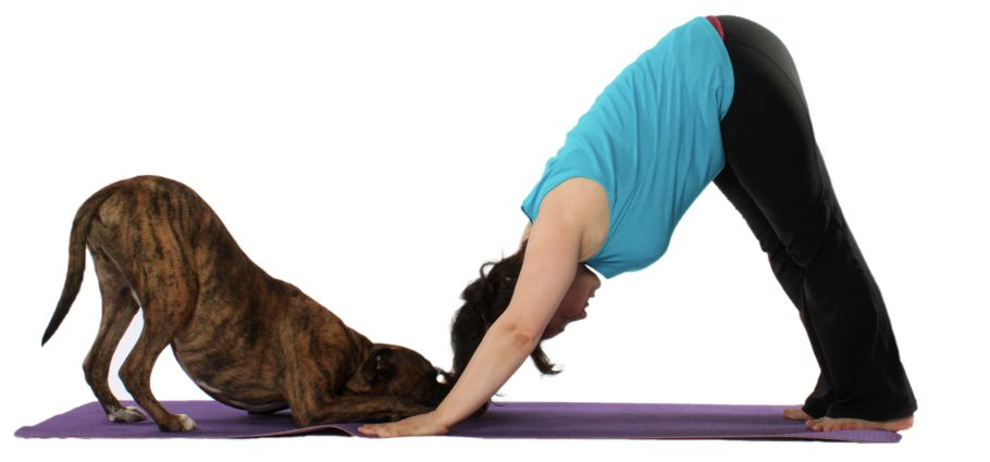 A dog and a woman doing the Downward Dog Pose.